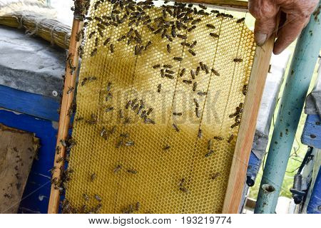 Roy Bees On Wax Combs. Bee Honeycomb, Plank With Honeycomb From The Hive. Honey Bee.