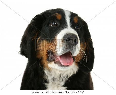 Cute funny dog on white background, closeup