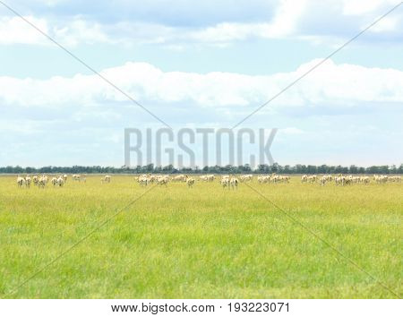 Herd of kulans in steppe on summer day