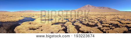Swamp with dry grass hubbles.  Mountains of Altiplano, Bolivia, South America