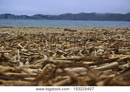 Wooden chips sticks and twigs on a beach. Shallow depth of field.