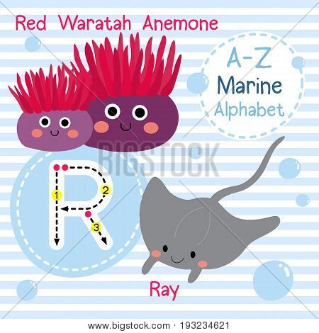 Cute children sea alphabet flashcard of funny marine animal cartoon R letter tracing for kids learning English vocabulary vector illustration.