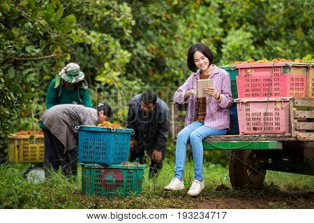 Asian girl inspects rambutan garden with tablet