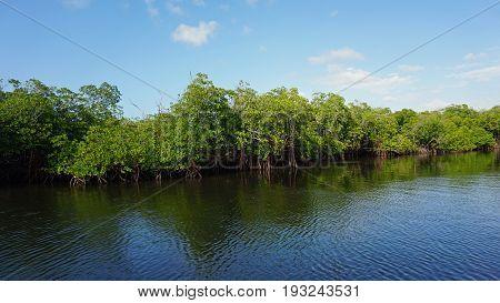 Mangroves At Punta Rusia