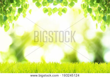 Green leaves and green grass with green bokeh backgrounds. Bonhi leaves. Abstract backgrounds.