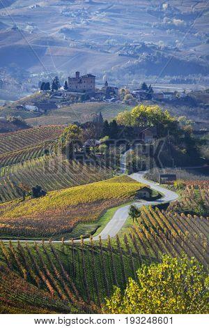 Road Between The Hills Of Langa Piemonte Italy