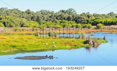 Loch McNess at Yanchep National Park near Perth in Western Australia.