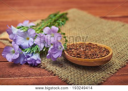 Flax Seeds In Wooden Spoon,  Linum Plants With Flower   With Vintage Sackcloth On Wooden Background