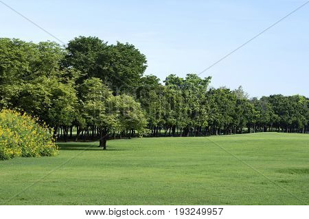 View of Park with Green Grass and Trees
