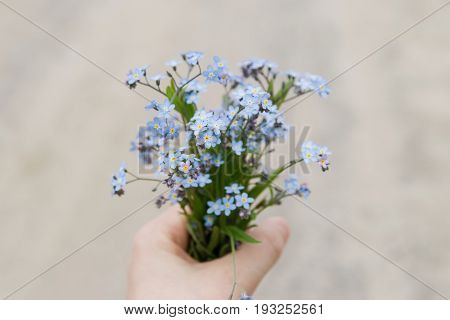 Closeup of holding blue forget-me-not flowers in hand.