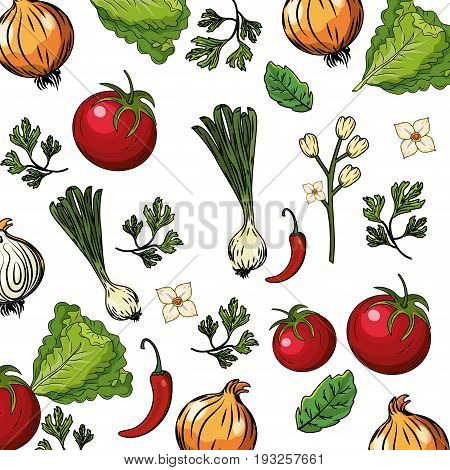herbs and spices plants and organ food background vector illustration