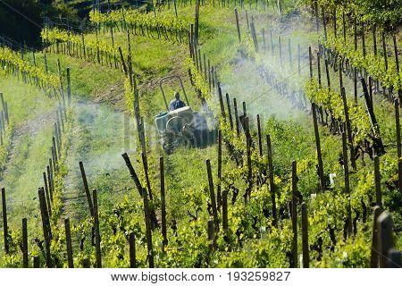 Farmer With Tractor Between Vineyards