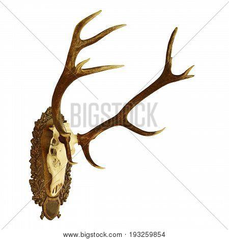 large red deer hunting trophy ( Cervus elaphus ) isolated on white