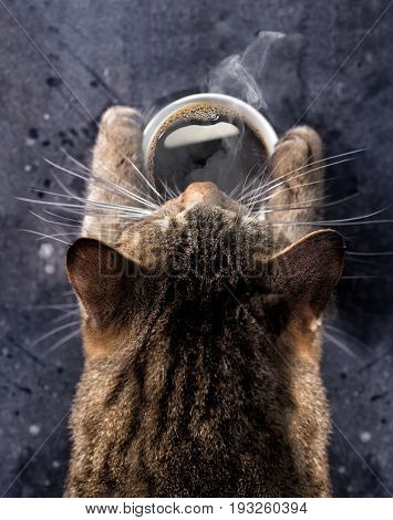 Cat's paws hold a cup of hot black coffee. A gray cat bent over a cup of coffee with steam.