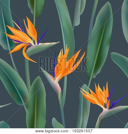 Seamless pattern with Strelitzia Reginae flower known as crane flower, bird of paradise. South African flowering plant background vector. Fabric print, textile with green leaves and orange blossom.