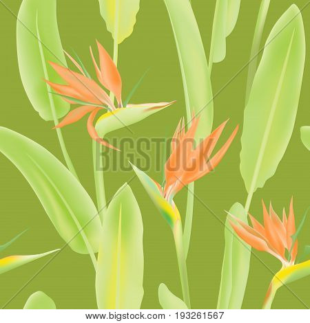 Vector seamless pattern with Strelitzia Reginae blossom also known as crane flower or bird of paradise. South African flower, plant with green leaves. Background illustration, fabric print, textile.
