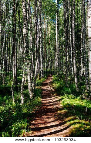 Foot Path In An Aspen Forest In Finland National Park