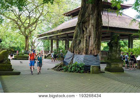 Macaque Monkeys At Ubud Sacred Monkey Forest, Bali