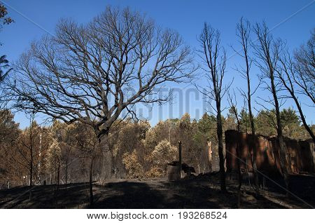 Cork Tree, Pine Trees And An Old Shed Burnt To The Ground - Pedrogao Grande