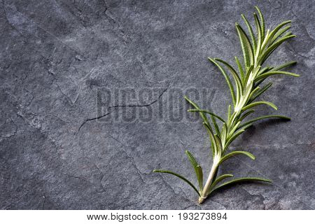 Rosemary sprig on dark slate.  Top view with copy space.