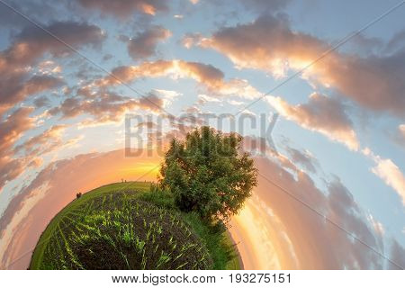 Radial panorama tree in the field / abstract sunset world