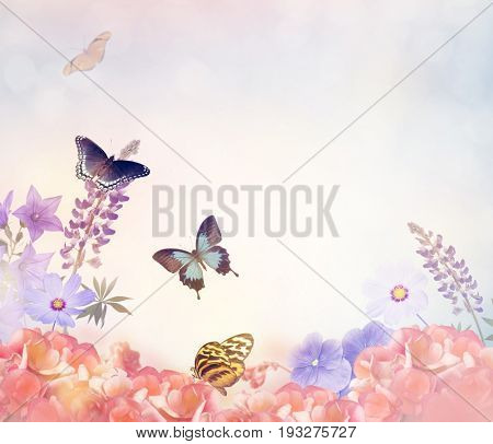 Beautiful Background with Flowers and Butterflies