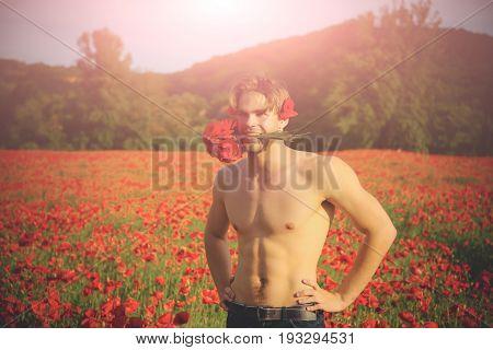 man with bouquet. guy with muscular body hold in teeth flower in field of red poppy seed with green stem on sunny natural background summer drug and love intoxication opium valentines day