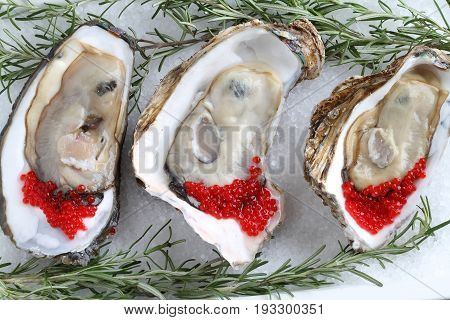 Fresh open oysters with salmon roe on salt background