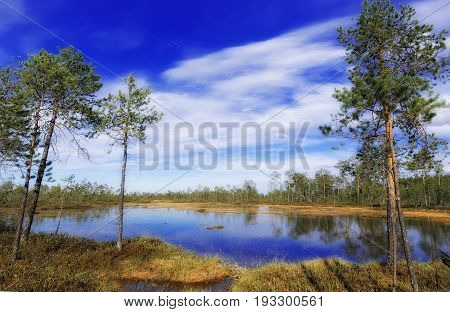 Impassable summer swamp in the Siberian taiga