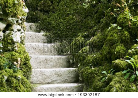 Moss covered stairs in the forest, portugal
