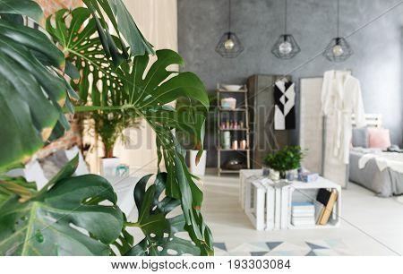 Tropical original plant in modern industrial apartment