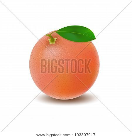 Isolated colored whole juicy pink grapefruit with green leaf and shadow on white background. Realistic citrus fruit
