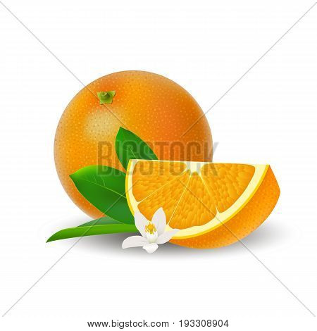 Isolated colored group of orange slice and whole juicy fruit with white flower green leaf and shadow on white background. Realistic citrus