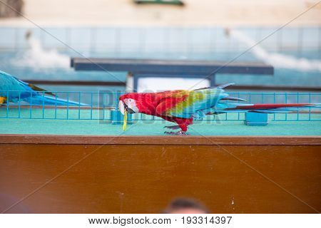 Circus Shows Of Parrots Playing Rings