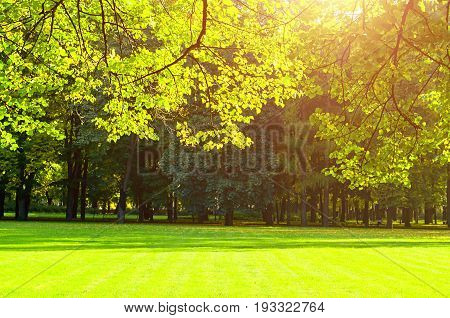 Autumn trees in sunny autumn park lit by sunshine - sunny autumn landscape in soft autumn sunlight. Colorful autumn view of sunny autumn city park. Autumn sunny landscape with autumn trees
