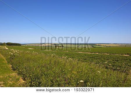Scenic Potato Crop