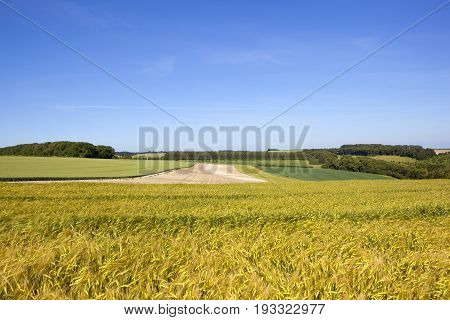 Yorkshire Wolds Barley And Wheat