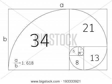 Golden ration section proportions  frame  vector illustration