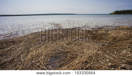 Dead reeds on the shoreline of Dore Lake in Canada