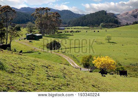 Meadows And Mountains On The Coromandel Peninsula