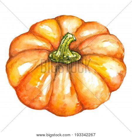 Watercolor orange pumpkin vegetable Jack-o-lantern Halloween isolated