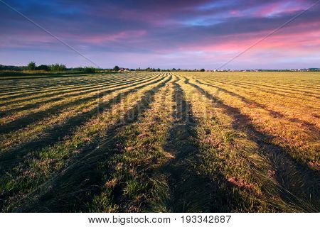 Mowed hay field on evening time.