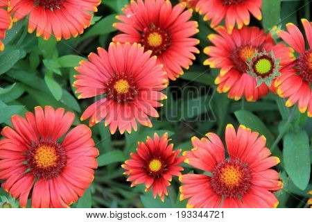 Horizontal image of bright and colorful flowers in Summertime garden
