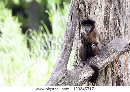 Monkey Stands On A Tree And Looks Around