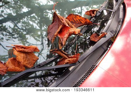 Dead leaves on car windscreen during autumn