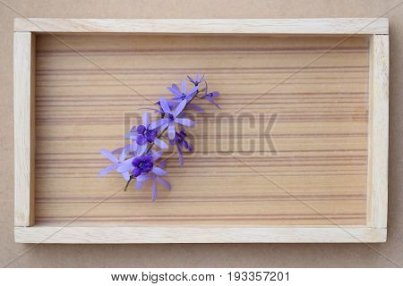 Bunch of Sandpaper vine flower on wooden frame background top view with empty space for text.