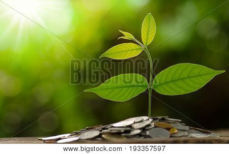 Money and growing of business concept Tree grow on pile of money coins over green background and sunlight