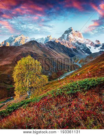 Colorful Autumn Morning With Mt. Ushba