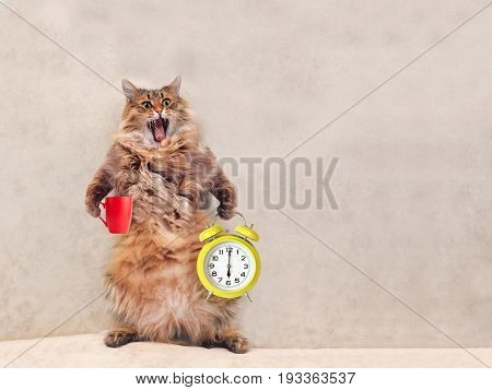 The Big Shaggy Cat Is Very Funny Standing.mug 4