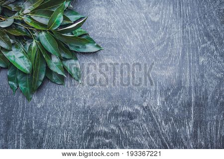 Fresh Organic Lychee Leaves On A Rustic Wooden Background